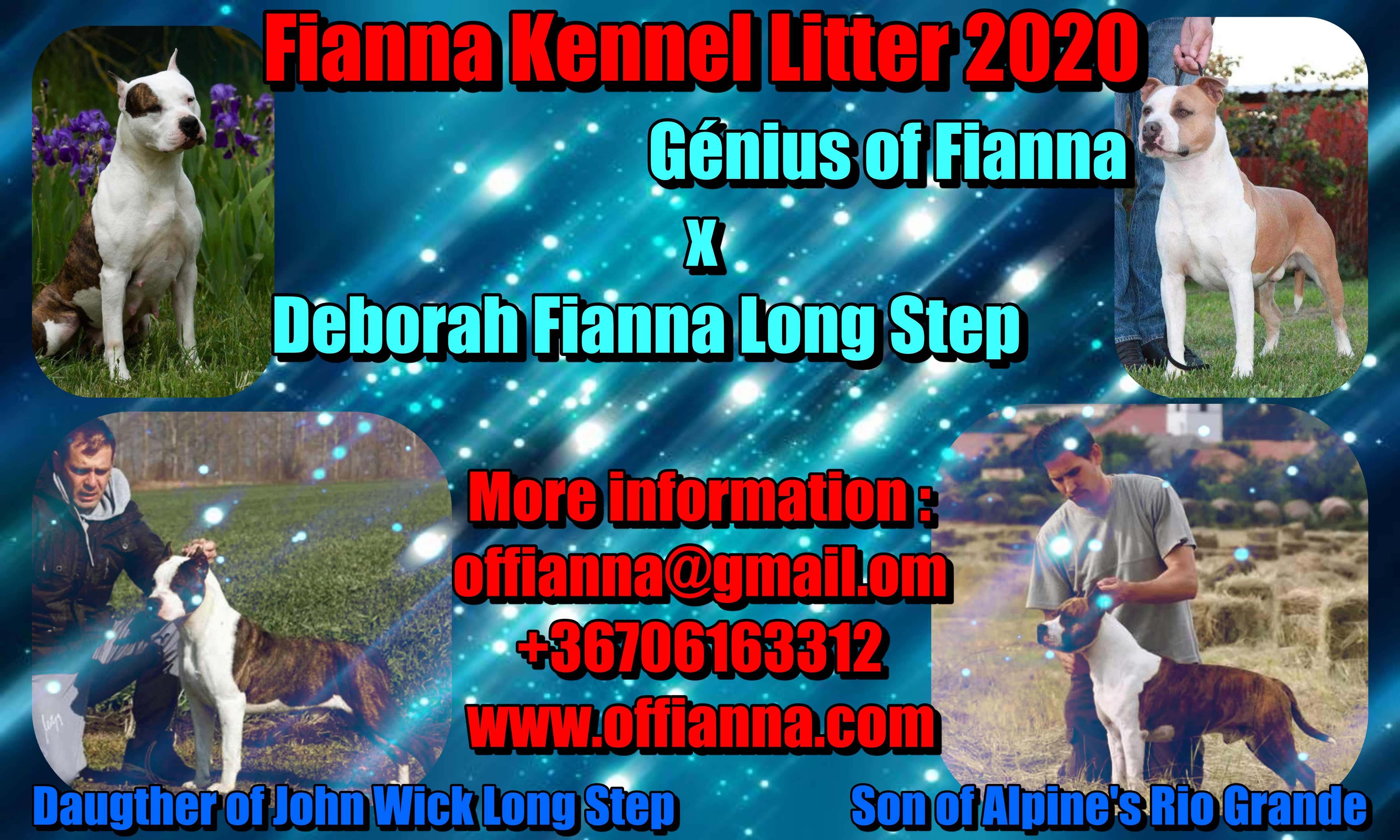 Fianna Kennel Litter 2020
